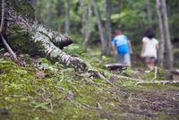 木の根元と子供2人の後ろ姿 11070021057| 写真素材・ストックフォト・画像・イラスト素材|アマナイメージズ