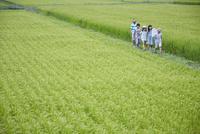 緑の田園とあぜ道を歩く子供達
