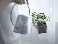 観葉植物に水をやる女性の手元 11070021071| 写真素材・ストックフォト・画像・イラスト素材|アマナイメージズ