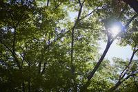 緑の枝葉と木漏れ日