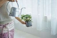 観葉植物に水をやる女性