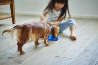 カニンヘンダックスフンドに水をあげる女の子 11070021712| 写真素材・ストックフォト・画像・イラスト素材|アマナイメージズ