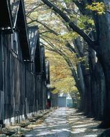 秋の山居倉庫とケヤキ並木