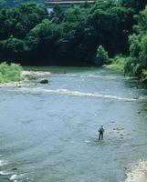 広瀬川アユ釣りをする人