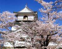桜の白石城