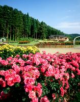東沢公園バラ園