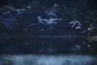 サクラ咲く夜明けの水辺