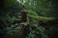 森の中の苔生す倒木