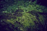 苔と新芽 11070024474| 写真素材・ストックフォト・画像・イラスト素材|アマナイメージズ