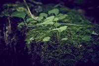 苔と新芽 11070024475| 写真素材・ストックフォト・画像・イラスト素材|アマナイメージズ