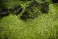苔生す庭石
