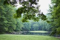 緑の森林と沼