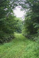 草木が茂る道