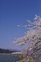 桜咲く桧木内川 秋田県 11070025077| 写真素材・ストックフォト・画像・イラスト素材|アマナイメージズ