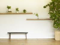 ベンチと観葉植物がある室内