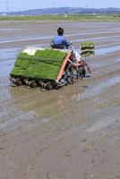 機械で田植をする農夫