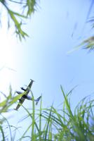 青空と飛行機 11070027702| 写真素材・ストックフォト・画像・イラスト素材|アマナイメージズ