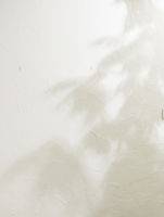 白い壁と木の影