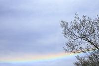 虹と木 11070032311| 写真素材・ストックフォト・画像・イラスト素材|アマナイメージズ