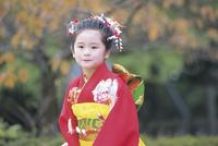 七五三和装の女の子 11070033951| 写真素材・ストックフォト・画像・イラスト素材|アマナイメージズ