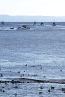 海鳥と羅臼の海