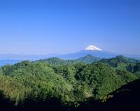 伊豆の国市かつらぎ山からの新緑と富士山