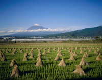 富士市中里より新幹線と富士山