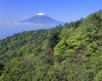 富士河口湖町三ツ峠の緑樹と雲海の富士山