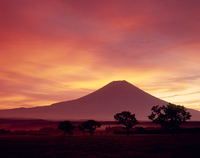 富士宮市麓からの朝焼け雲と富士山