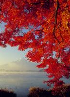 河口湖大石地区の紅葉と富士山 11076000248| 写真素材・ストックフォト・画像・イラスト素材|アマナイメージズ