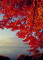 河口湖大石地区の紅葉と富士山