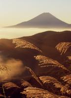 富士川町丸山林道のススキと富士山 11076000280| 写真素材・ストックフォト・画像・イラスト素材|アマナイメージズ