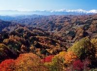 長野市鬼無里の大望峠より紅葉と北アルプス 11076000303| 写真素材・ストックフォト・画像・イラスト素材|アマナイメージズ