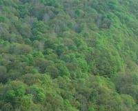 大町市小熊山林道の緑樹