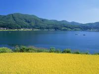 仁科三湖・木崎湖畔の稲田と釣り船