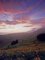霧ケ峰高原 車山肩のニッコウキスゲと朝焼け 11076000718| 写真素材・ストックフォト・画像・イラスト素材|アマナイメージズ