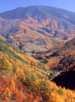 奈川地区のスーパー林道から見る鉢盛山と唐松紅葉 11076000782| 写真素材・ストックフォト・画像・イラスト素材|アマナイメージズ