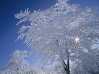 高ボッチ高原の霧氷の木と太陽 11076000823| 写真素材・ストックフォト・画像・イラスト素材|アマナイメージズ