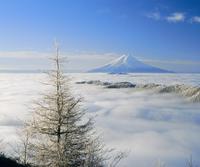 白谷丸より樹氷と雲海の富士山 11076000840| 写真素材・ストックフォト・画像・イラスト素材|アマナイメージズ