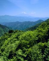 安倍林道の新緑と富士山