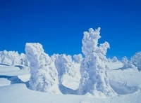 八甲田 田茂萢岳から樹氷