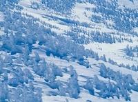 八甲田 田茂萢岳から樹氷の雪原