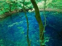十二湖 原生林に囲まれた青池
