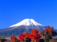 花の都公園より紅葉と富士山