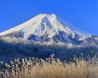 忍草の霧氷と富士山