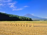 内野より稲田と富士山 11076002056| 写真素材・ストックフォト・画像・イラスト素材|アマナイメージズ