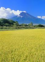 内野より稲田と富士山 11076002058| 写真素材・ストックフォト・画像・イラスト素材|アマナイメージズ