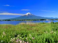 花咲く河口湖と富士山
