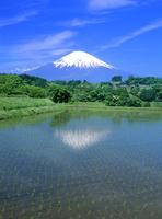 竹之下の水田と富士山 11076002132| 写真素材・ストックフォト・画像・イラスト素材|アマナイメージズ