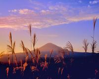 長尾峠ふきんのススキと富士山